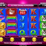 5 Free Spins Bonus Spin